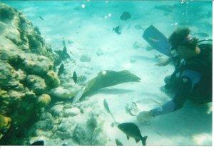 Caymans snorkeling