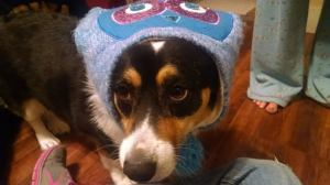 This picture of my corgi in an owl hat was a big hit!