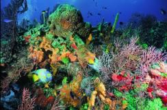 Cozumel-Snorkeling-Tours-2 (1)