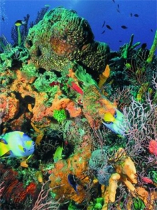 snorkeling-cancun